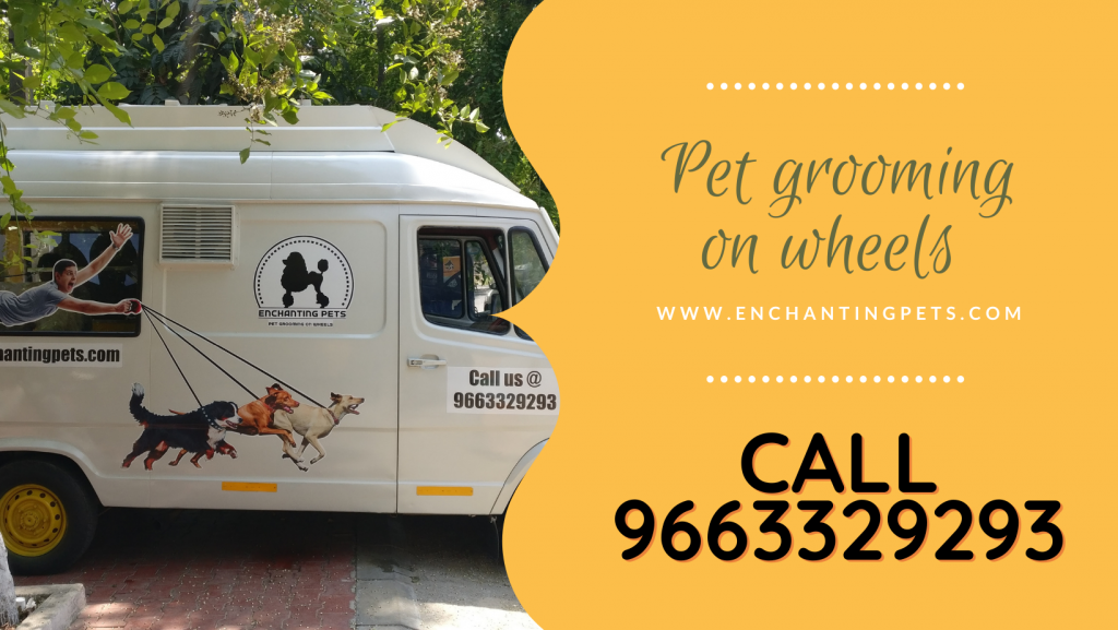 on-wheels-pet-grooming-services