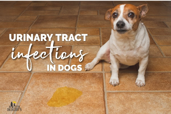 Dog UTI Symptoms
