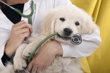 Puppy Health Problems