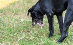 Dog Stomach Noises