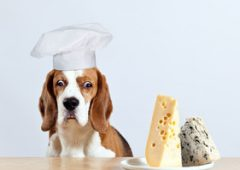 Dogs Eat Cheese